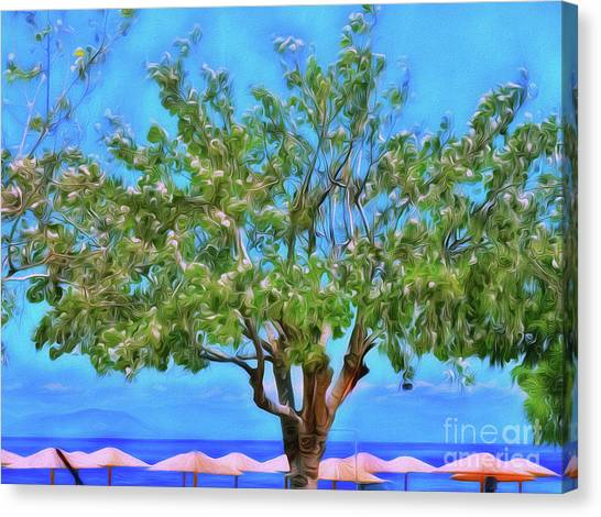 Canvas Print featuring the photograph The Smiling Tree Of Benitses by Leigh Kemp