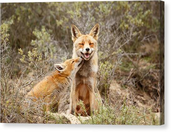Groom Canvas Print - The Smiling Vixen And The Happy Kit by Roeselien Raimond