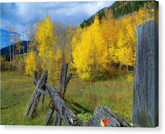 The Song Of Aspens Canvas Print by Tim Reaves
