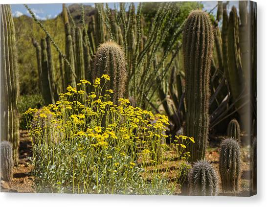 The Song Of The Sonoran Desert Canvas Print