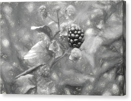 Wild Berries Canvas Print - The South Georgia Blackberry In Black And White by JC Findley