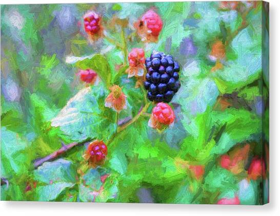 Wild Berries Canvas Print - The South Georgia Blackberry by JC Findley