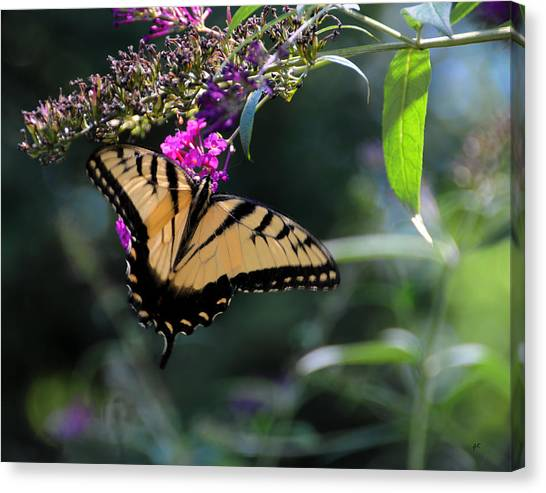 The Splendor Of Nature Canvas Print
