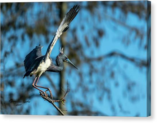 Florida Wildlife Canvas Print - The Stage Entry by Marvin Spates