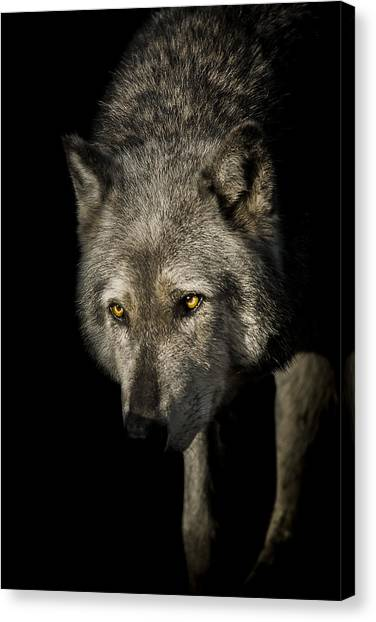 Predators Canvas Print - The Stalker by Paul Neville