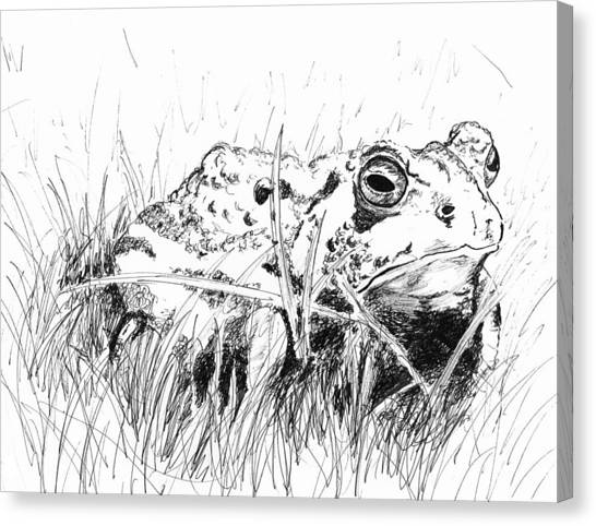 The Stalwart Old Toad Canvas Print