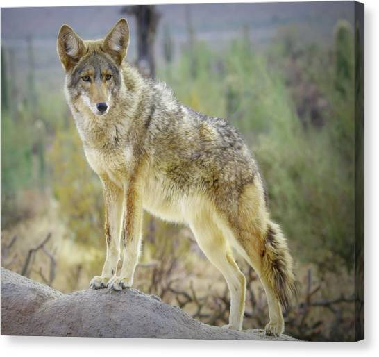 Canvas Print featuring the photograph The Stance by Elaine Malott