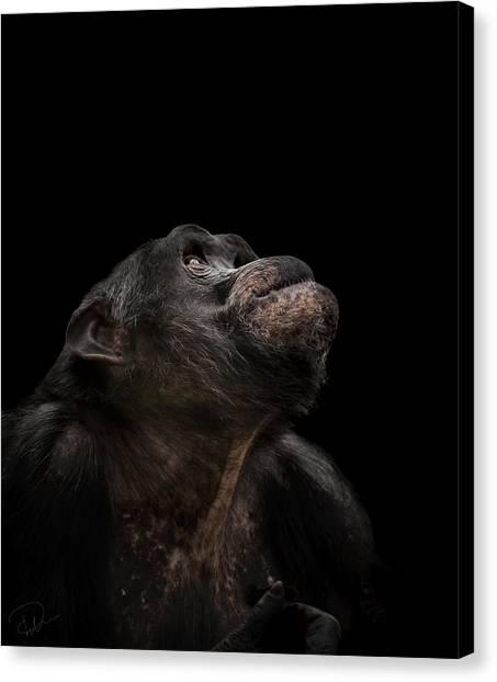 Chimpanzees Canvas Print - The Stargazer by Paul Neville