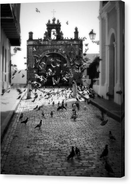 Pavers Canvas Print - The Street Pigeons by Perry Webster