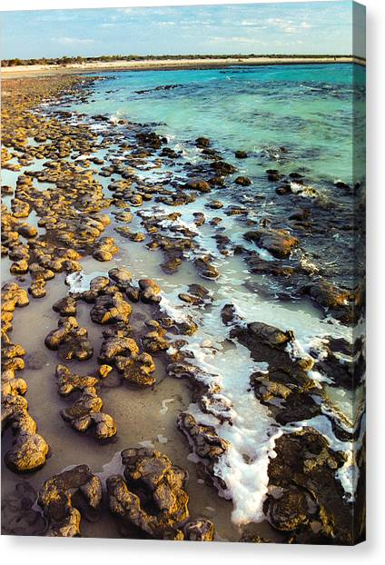 Canvas Print featuring the photograph The Stromatolite Family Enjoying Its 1277500000000th Sunset by T Brian Jones