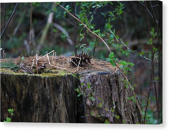 The Stump Canvas Print