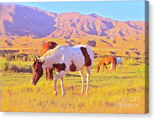 'the Sundowners' Canvas Print