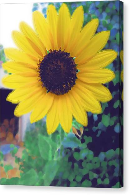 The Sunflower Canvas Print by Chuck Shafer