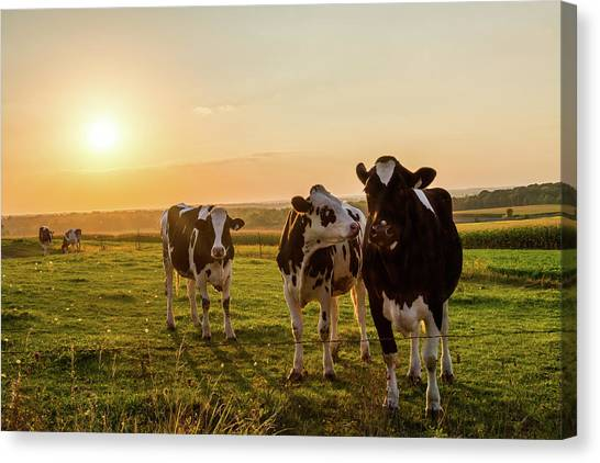 The Sunset Graze Canvas Print