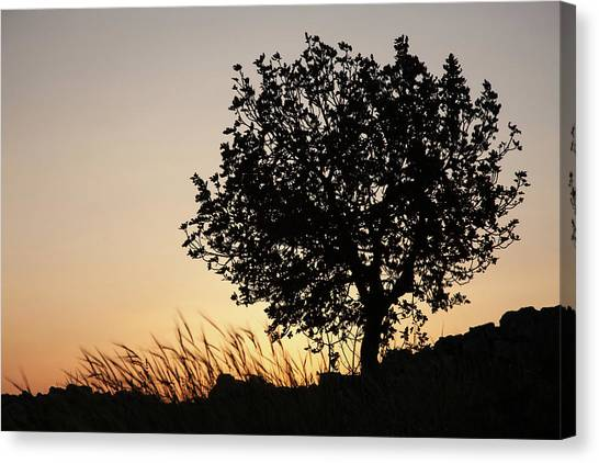 Sunset On The Hill Canvas Print
