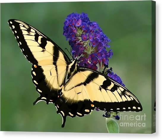 The Swallowtail Canvas Print