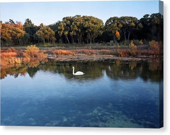 The Swan Of Cross Village Marsh Canvas Print