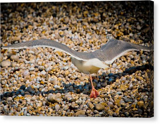 Etretat Canvas Print - The Takeoff by Loriental Photography