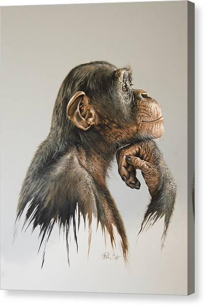 Chimpanzees Canvas Print - The Thinker by Mario Pichler