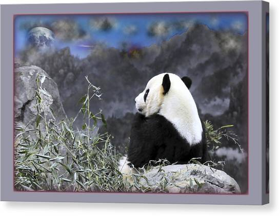 The Thinker Tai Shan In Repose Giant Panda  Canvas Print by Jonathan Whichard