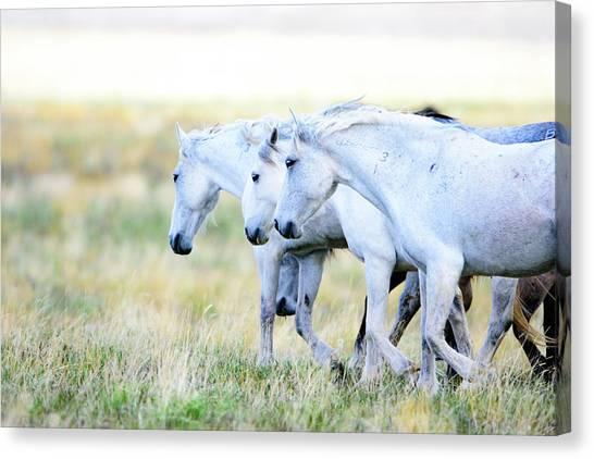 The Three Amigos Canvas Print