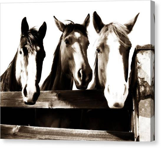 Horse Farms Canvas Print - The Three Amigos In Sepia by Michelle Shockley