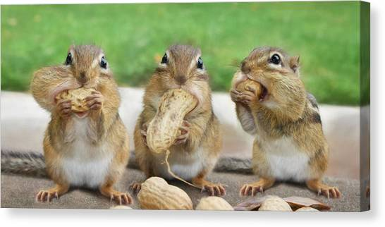 Squirrel Canvas Print - The Three Stooges by Lori Deiter