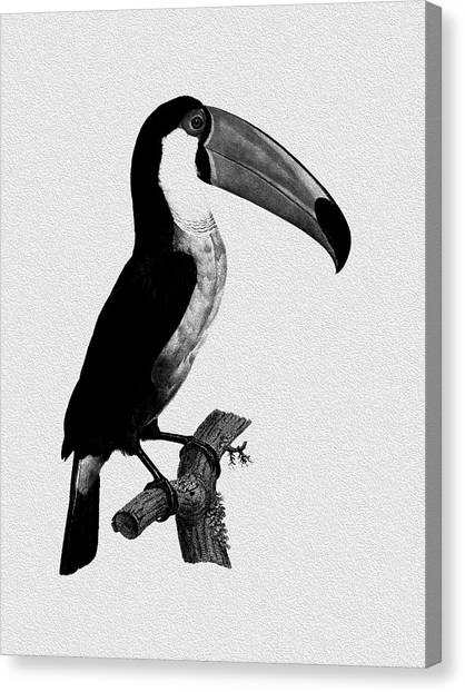 Toucans Canvas Print - The Toucan by Mark Rogan