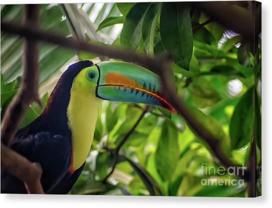 The Toucan Canvas Print