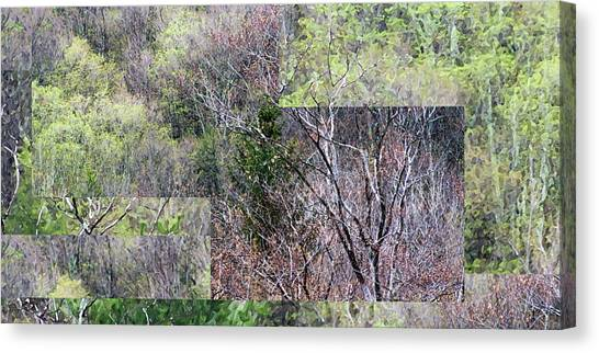 The Transition - Canvas Print
