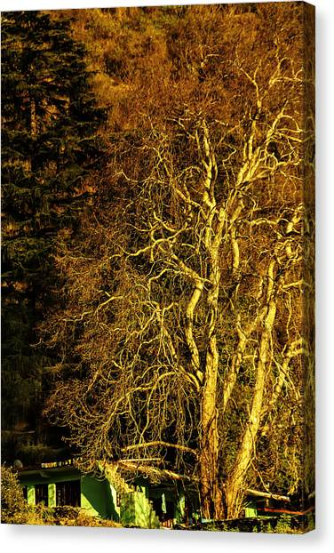 The Tree And The House Canvas Print