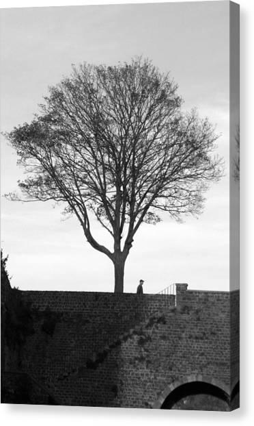 The Tree Canvas Print by Jez C Self