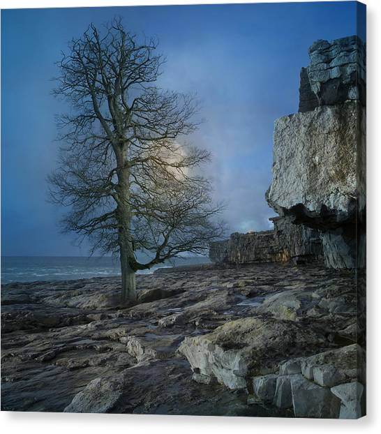 Tumbling Canvas Print - The Tree Of Inis Mor by Betsy Knapp