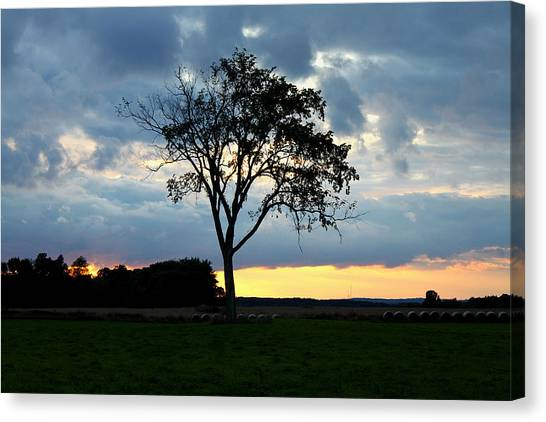 The Tree Of Life Canvas Print by Mark  France