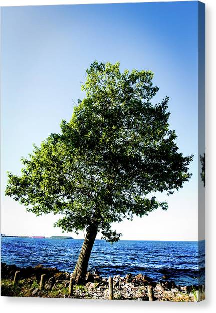 Canvas Print featuring the photograph The Tree by Onyonet  Photo Studios
