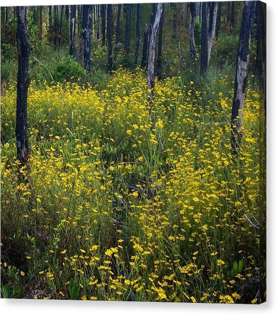 Okefenokee Canvas Print - The Trees Are Charred From The Fire Of by Karen Breeze