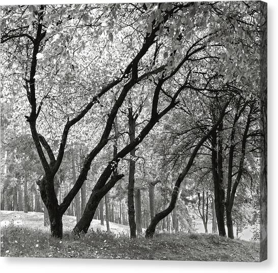 The Trees Dancing. Chernihiv, 2014. Canvas Print