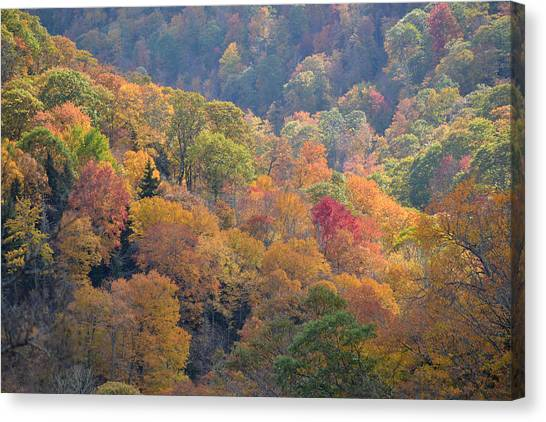 The Trees Of Autumn On The Blue Ridge Canvas Print