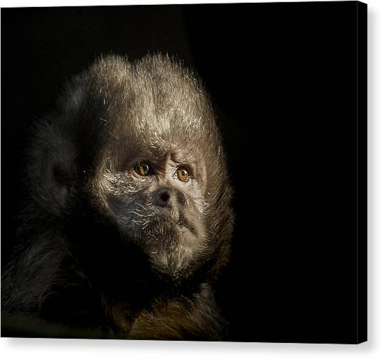 Primates Canvas Print - The Trial by Paul Neville