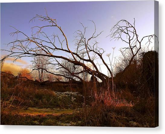 The Twilight Tree Canvas Print by Sophia Shine
