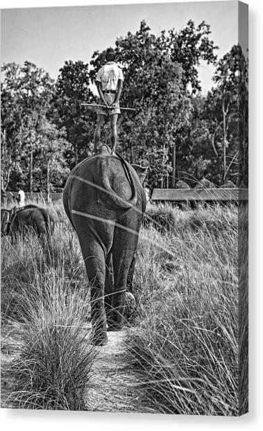 Bareback Canvas Print - The Ultimate Bareback Ride Bw by Steve Harrington