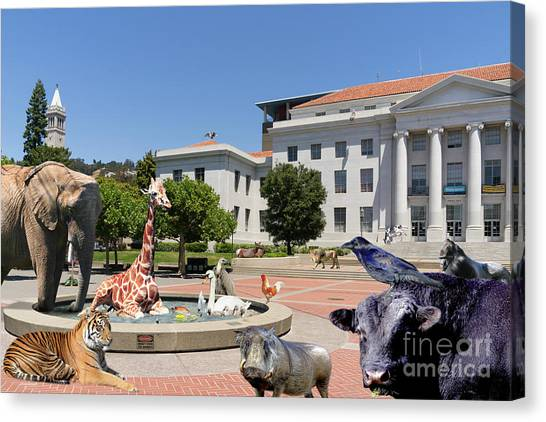 Uc Berkeley Canvas Print - The University Of California Berkeley Welcomes You To The Zoo Please Do Not Feed The Animals Dsc4086 by Wingsdomain Art and Photography