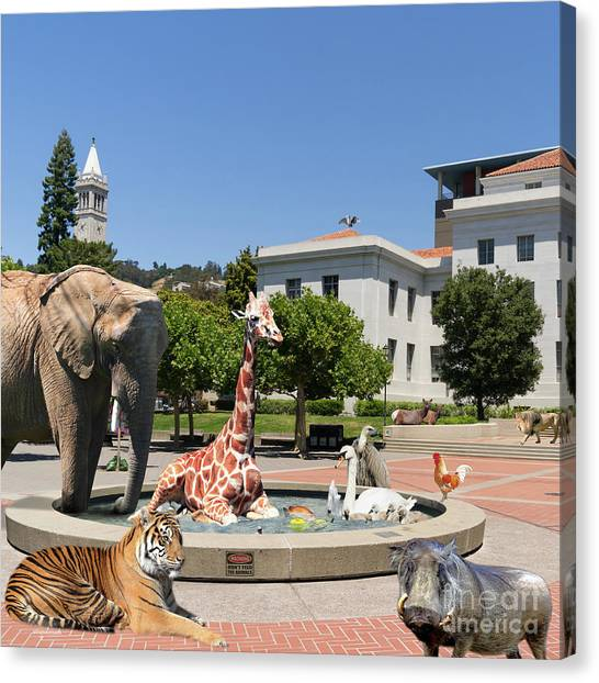 Uc Berkeley Canvas Print - The University Of California Berkeley Welcomes You To The Zoo Please Do Not Feed The Animals Square by Wingsdomain Art and Photography