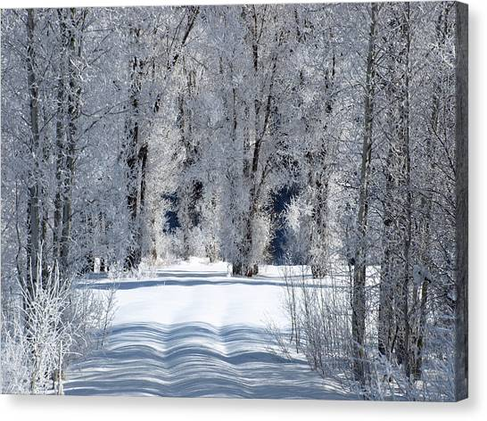 The Untraveled Winter Road Canvas Print
