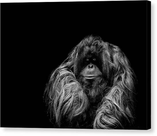 Ape Canvas Print - The Vigilante by Paul Neville