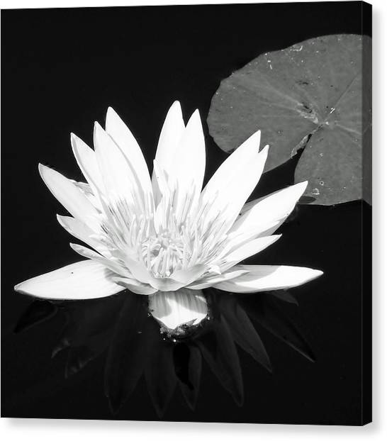 The Vintage Lily II Canvas Print