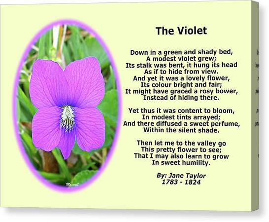 The Violet Classical Wildflower Nature Poetry By Jane Taylor Canvas Print by Maxwell