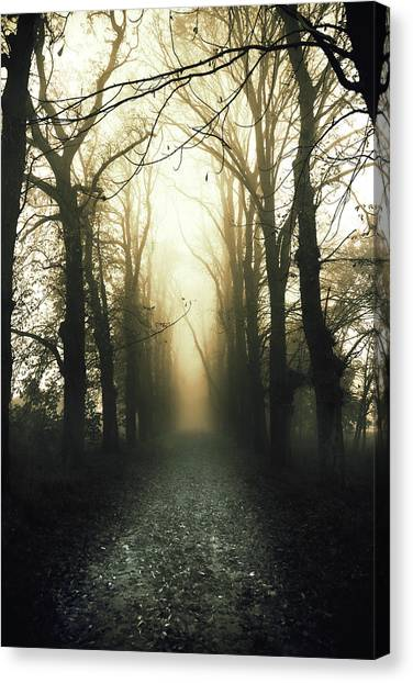 Foggy Forests Canvas Print - The Void by Art of Invi