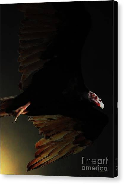 Undertaker Canvas Print - The Vulture by Wingsdomain Art and Photography