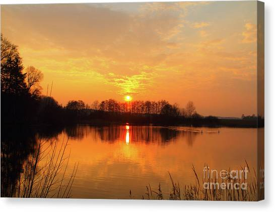 Swan Canvas Print - The Waal by Smart Aviation